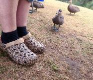Ducks everywhere