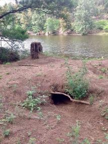 Wombat burrow