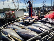 Tuna being unloaded at Ulladulla