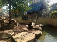 Monkey enclosure