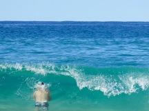 Brendyn bravely going for a dip