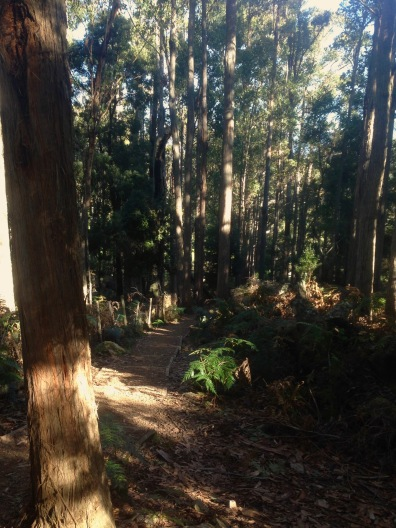 Walking to Alum Cliffs lookout