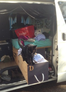 Monkey was very interested in the van
