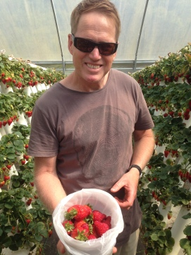 Strawberry picking at Ricardoes